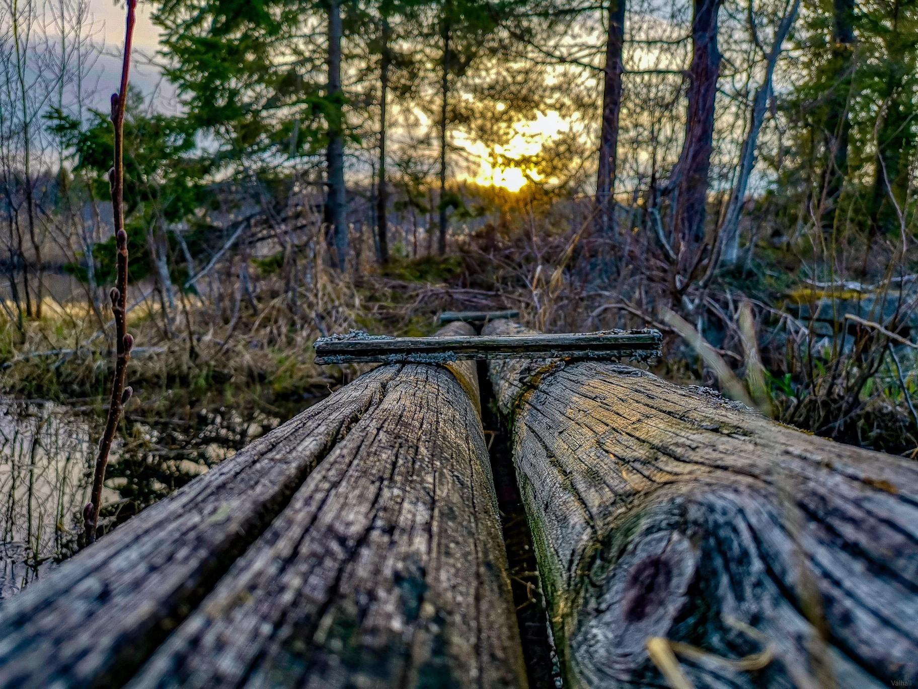 Natur, Fotograf: Jesper Eriksson